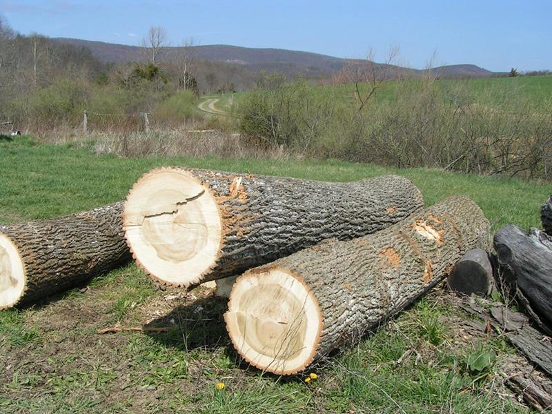 Polyface_Lumber